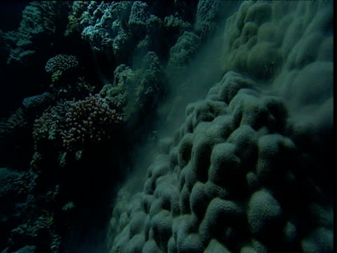 cloud of sperm rises from spawning coral, great barrier reef, australia - great barrier reef stock videos & royalty-free footage