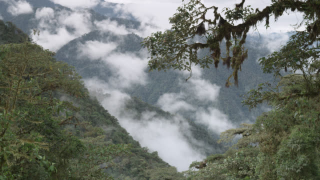 cloud over moist cloud forest, ecuador - south america stock videos & royalty-free footage