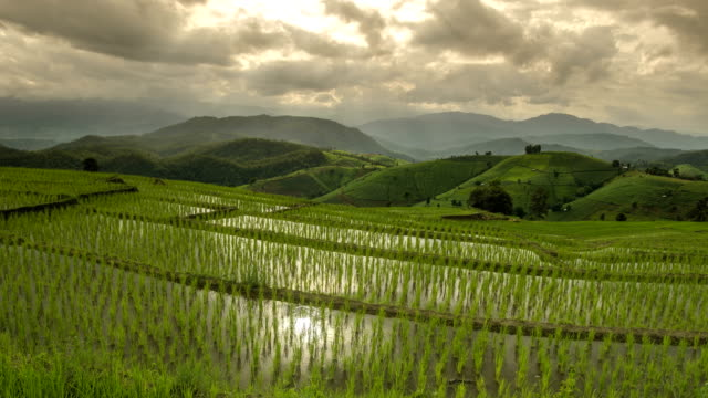 TL: cloud reflect on fresh water in delighted rice terrace