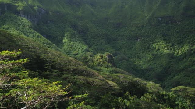 vidéos et rushes de cloud shadows passing over a rainforest - île d'huahine