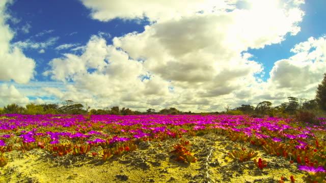stockvideo's en b-roll-footage met cloud time-lapse - wilde bloem