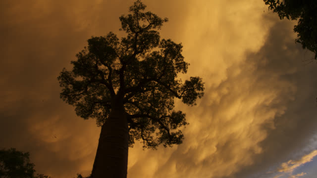 tl cloud turns orange over baobab tree, madagascar - tree stock videos & royalty-free footage