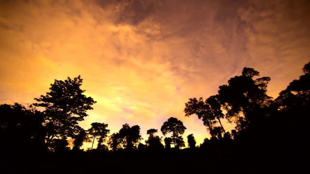 Cloud-mit Sonnenlicht über Wald