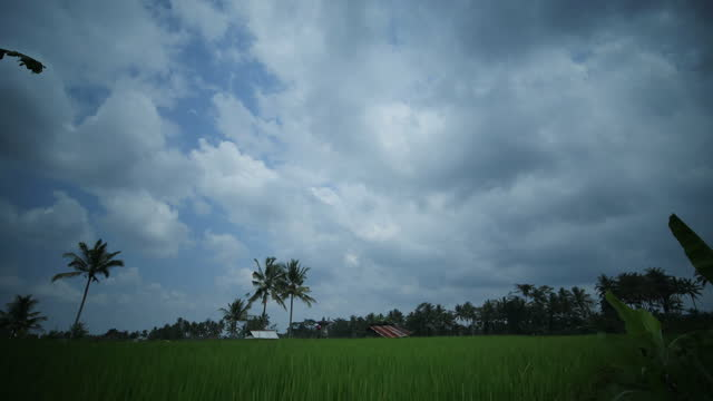 clouds above farmland in ubud district / bali, indonesia - ubud district stock videos & royalty-free footage