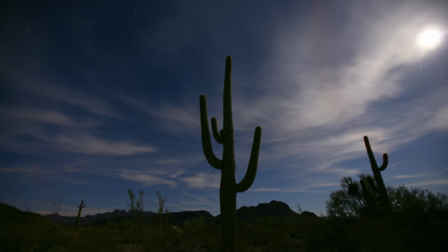 time lapse low angle wide shot clouds and stars and moon rises over cacti in desert - arizona cactus stock videos & royalty-free footage