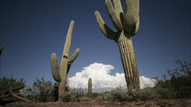 vídeos de stock e filmes b-roll de clouds billow behind saguaro cacti in the sonoran desert. available in hd. - cato