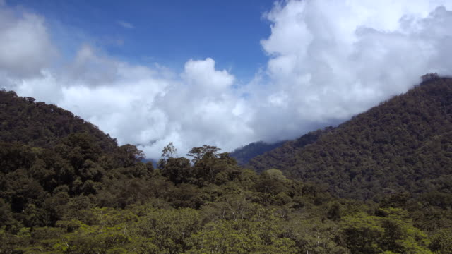 tl clouds billow over rainforest and hills, sumatra - copertura di alberi video stock e b–roll