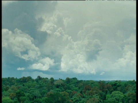 clouds billow over rainforest - rauchartig stock-videos und b-roll-filmmaterial