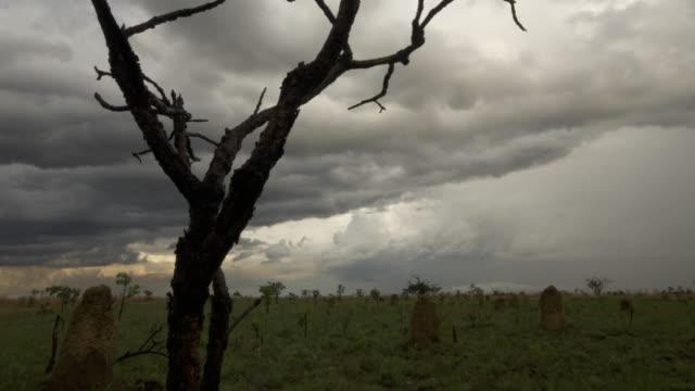 vídeos de stock, filmes e b-roll de clouds billow over termite mounds in grassland as night falls. - savana