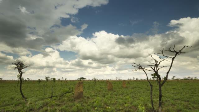 vídeos de stock, filmes e b-roll de clouds billow over termite mounds in grassland. - savana