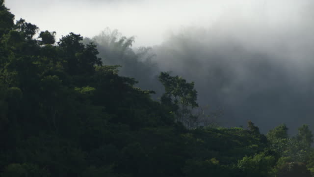 clouds cover a rain forest in jamaica - jamaica stock videos & royalty-free footage