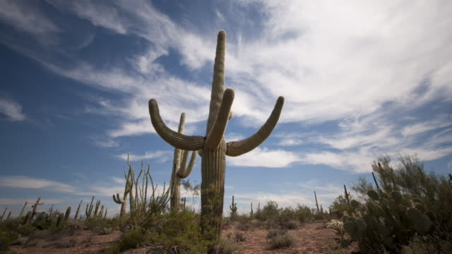 Clouds drift above a saguaro cactus and other vegetation in the Sonoran Desert. Available in HD.