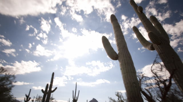 Clouds drift above saguaro cacti in the Sonoran Desert. Available in HD.