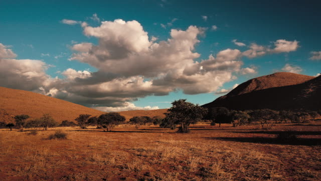 vídeos y material grabado en eventos de stock de clouds drift above trees in the kalahari desert. available in hd. - desierto del kalahari