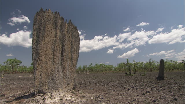 clouds drift over a termite mound. - northern territory australia stock videos & royalty-free footage