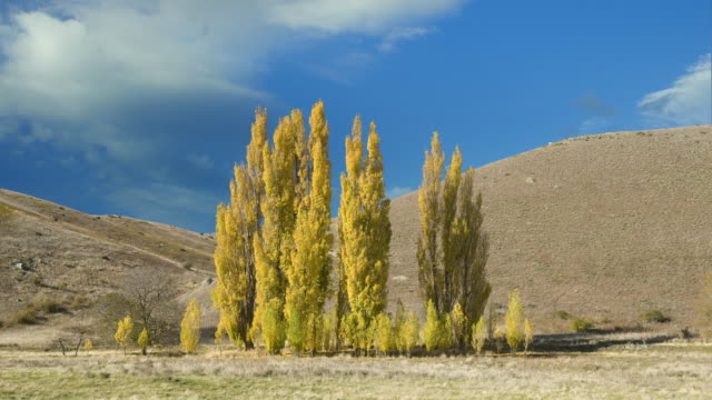clouds drift over poplar trees in autumn colors. - otago region stock videos & royalty-free footage