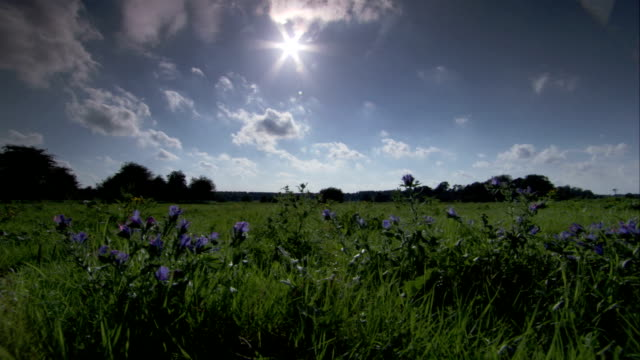 Clouds drift through a bright blue sky over an English meadow. Available in HD.