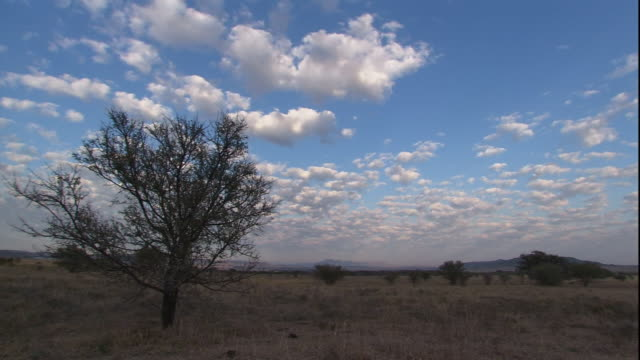 clouds float over a grassy field at sunset. - south africa stock videos & royalty-free footage