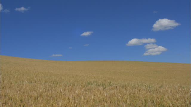clouds float over a wheat field in palouse, washington. - palouse stock videos & royalty-free footage