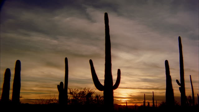 clouds flow over cacti in a desert. - southwest usa stock videos & royalty-free footage