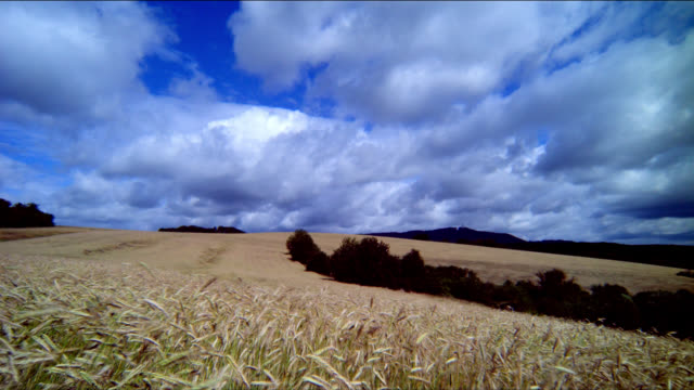 Clouds hang in a blue sky over a vast rye field waving in the wind.