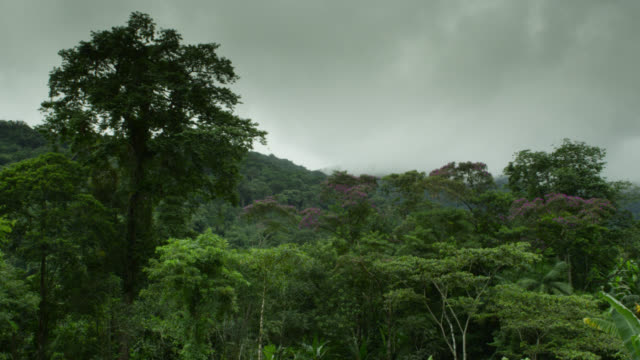 Clouds hang over rainforest.