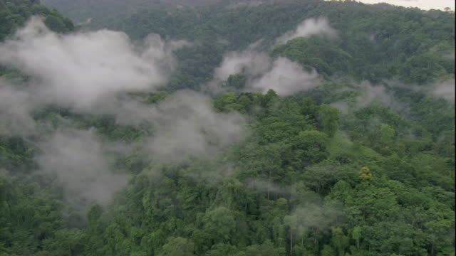 Clouds hover over the rainforest canopy in Costa Rica. Available in HD.