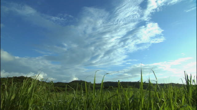 LA WS Clouds hovering above lush green fields with mountains in background / Montego Bay, Jamaica