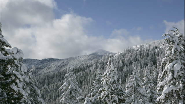Clouds move quickly over snowy forested mountains.