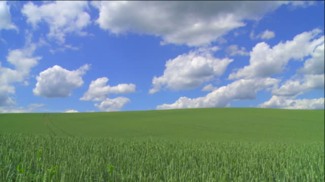 HD Clouds Moving Above Grain Field (TL)
