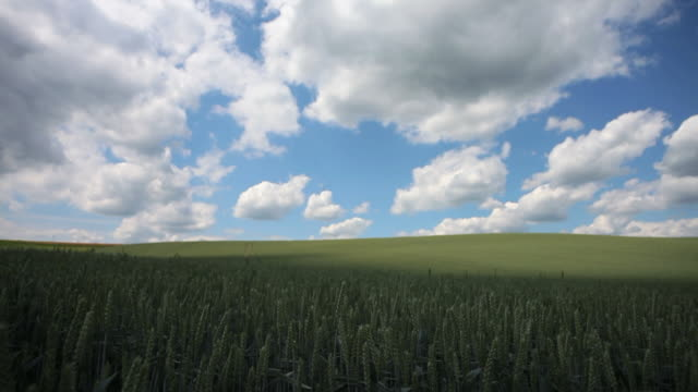Clouds Moving Above Grain Field