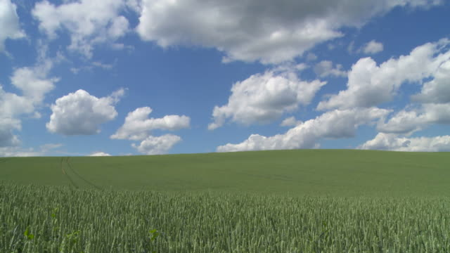 Clouds Moving Above Grain Field (Time Lapse)