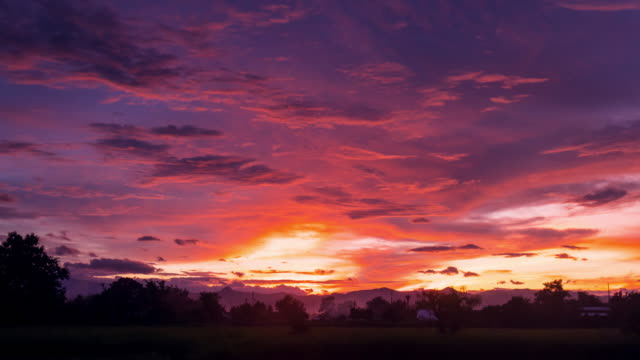 Clouds moving and Sunset on green paddy rice field Time lapse.