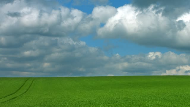 clouds moving over corn field in spring - lush video stock e b–roll