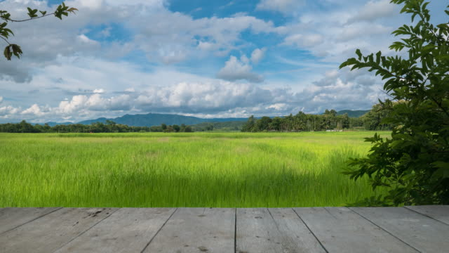 clouds moving over the green rice field with wood texture - pasture stock videos & royalty-free footage