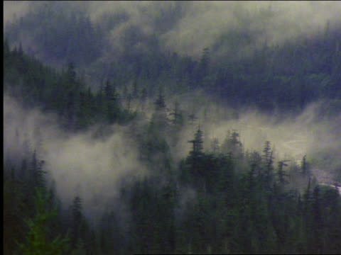 clouds (fog?) moving thru pine trees in valley / mt rainier national park, washinton - mt rainier national park stock videos & royalty-free footage