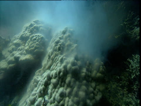 clouds of sperm rise from spawning coral, great barrier reef - coral stock videos & royalty-free footage