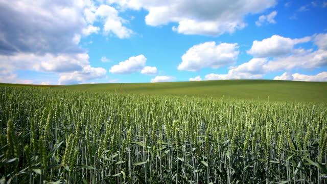 vídeos y material grabado en eventos de stock de nubes sobre grano campo cinemagraph - grano planta
