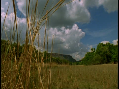 wa clouds over grassland and mountain, bandhavgarh national park, india - national icon stock videos and b-roll footage