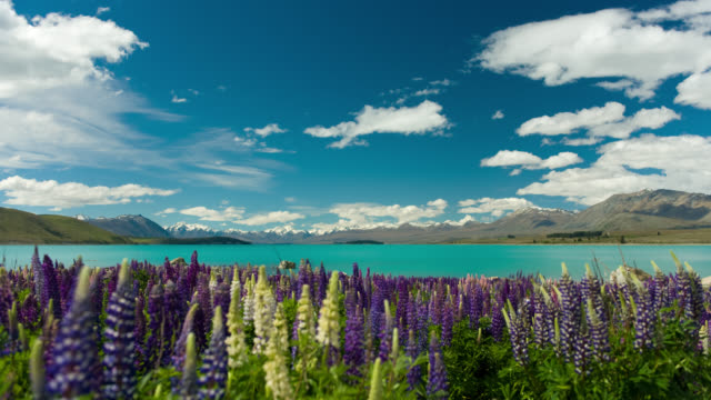 t/l, ws, clouds over lake tekapo and mountains, blooming lupines in foreground, south island, new zealand - abgeschiedenheit stock-videos und b-roll-filmmaterial
