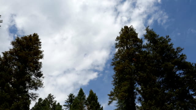Clouds Over Mountain Forest Pine Trees