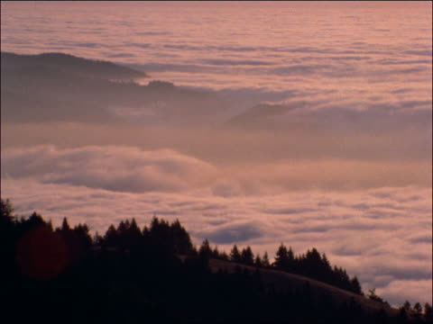 clouds over pine trees - pinacee video stock e b–roll