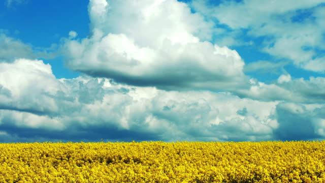 vidéos et rushes de nuages au dessus de cinemagraph de champ de colza - cinémagraphie