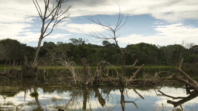 Clouds pass over dead trees reflected in floodwaters.