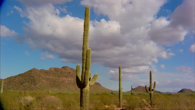 Clouds pass over the desert cacti in the Organ Pipe Cactus National Monument of Arizona.