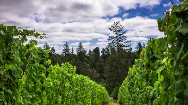 Clouds Passing Over Vineyard - Timelapse