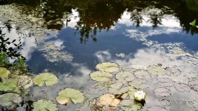 Clouds reflected in a pond-Time passing