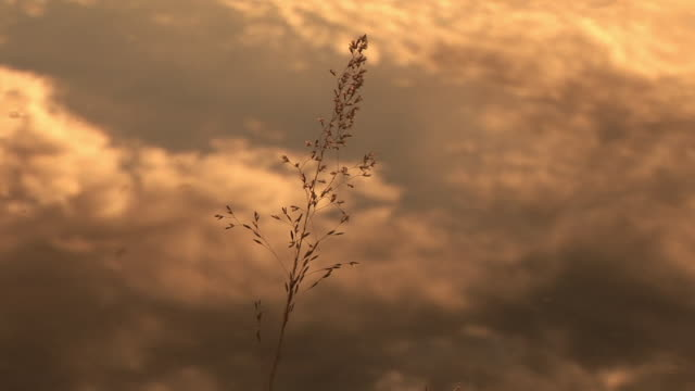 cu, selective focus, clouds reflected in water at sunset, single grass in foreground, snake river, grand teton national park, wyoming, usa - snake river stock videos & royalty-free footage