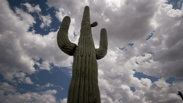 Clouds scud above a towering saguaro cactus. Available in HD.