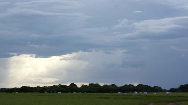 Clouds scud over grazing cattle on grassland.